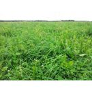 Pure Graze saladebuffet Basis (1/2 ha)