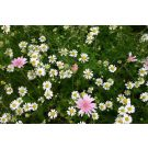 Stroomdalflora (100 gram)